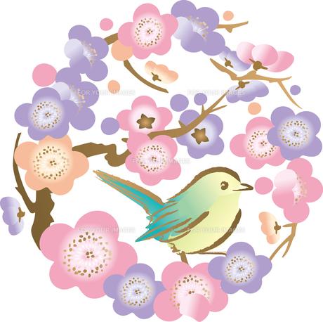 梅とうぐいすの写真素材 [FYI00123241]