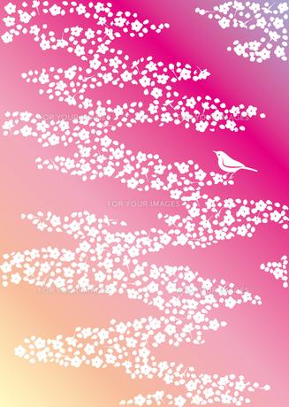 桜とうぐいすの素材 [FYI00123247]