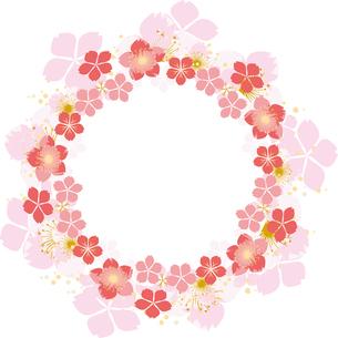 桜のフレームの写真素材 [FYI00123251]