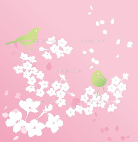 桜とうぐいすの素材 [FYI00123254]