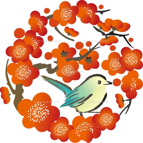 梅とうぐいすの写真素材 [FYI00123259]