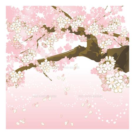 桜の素材 [FYI00123261]