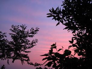 茜色の空の写真素材 [FYI00123487]