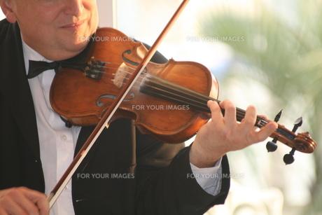 バイオリンの写真素材 [FYI00123529]