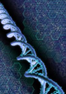 gemoneの写真素材 [FYI00123706]