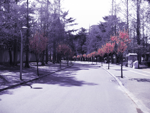 parkの写真素材 [FYI00123714]