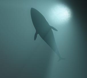 whaleの写真素材 [FYI00123735]