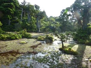 屋久島の森の写真素材 [FYI00123739]