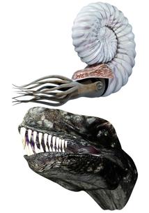 古代生物セットの写真素材 [FYI00123808]
