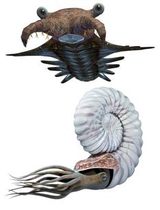 古代海洋生物セットの写真素材 [FYI00123850]