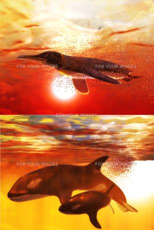 海の生物セットの写真素材 [FYI00123866]