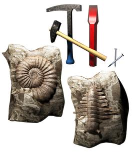 化石発見の写真素材 [FYI00124321]