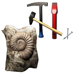 化石発見の写真素材 [FYI00124331]