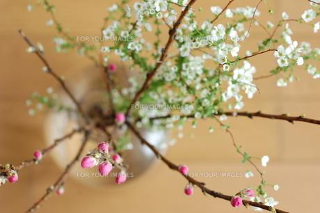 桃の花の写真素材 [FYI00124470]