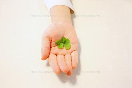 手のひらにハートの葉っぱの素材 [FYI00124607]