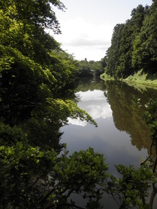水辺に映る木々と空の写真素材 [FYI00124613]