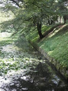 蓮の川と木々の写真素材 [FYI00124621]