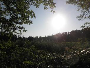 植物と陽の光の写真素材 [FYI00124644]