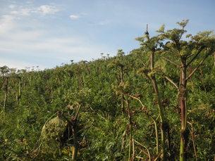 礼文島の自然の写真素材 [FYI00124651]