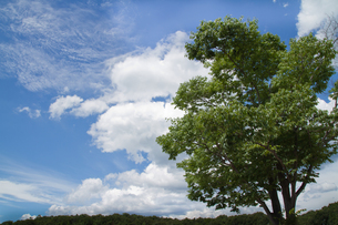 青空と緑の大樹の写真素材 [FYI00124720]
