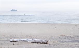 砂浜に流木の写真素材 [FYI00124723]