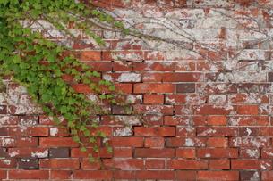 ツタの絡まる煉瓦倉庫の壁の写真素材 [FYI00124732]