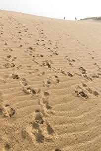 鳥取砂丘風と人間の足跡の素材 [FYI00124737]