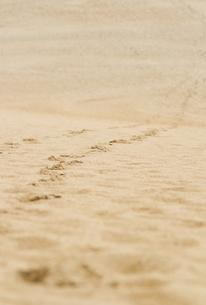 砂丘の足跡の写真素材 [FYI00124753]