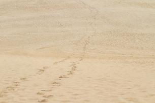砂丘の足跡の写真素材 [FYI00124754]