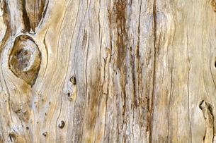 美しい古木の木目の写真素材 [FYI00124874]