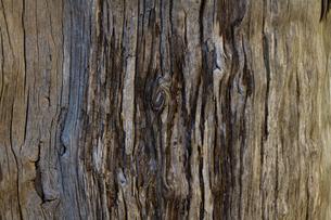 美しい古木の木目の写真素材 [FYI00124875]