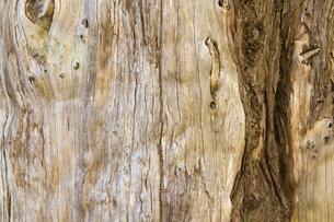 古木の木目の写真素材 [FYI00124879]