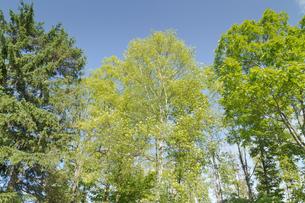 新緑の林の写真素材 [FYI00124882]