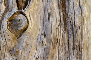 美しい古木の木目の写真素材 [FYI00124898]