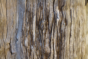美しい木の木目の写真素材 [FYI00124905]