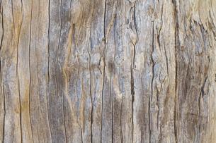 美しい古木の木目の写真素材 [FYI00124906]