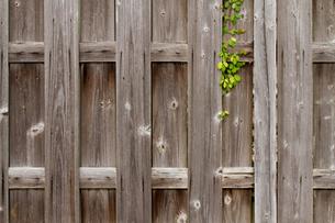 昭和レトロな板塀の写真素材 [FYI00124941]