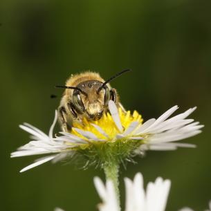 ハチの顔の写真素材 [FYI00125230]