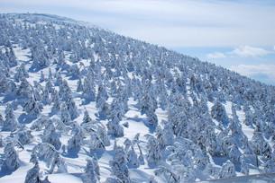 樹氷の写真素材 [FYI00125471]