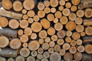 薪の写真素材 [FYI00125593]