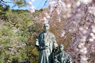 春の円山公園の写真素材 [FYI00125609]
