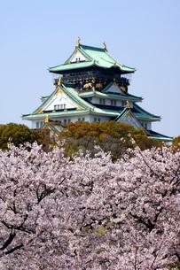 大阪城と桜の写真素材 [FYI00125686]