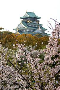 大阪城と桜の写真素材 [FYI00125690]