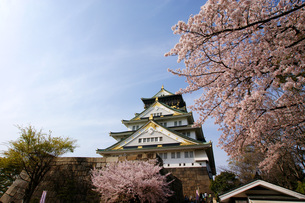 大阪城と桜の写真素材 [FYI00125694]