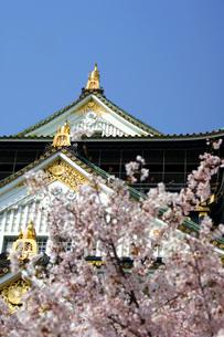 大阪城と桜の写真素材 [FYI00125699]