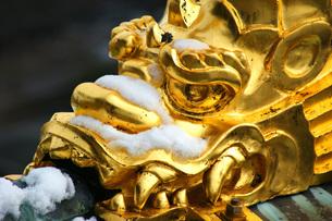 雪を着た黄金のシャチホコの写真素材 [FYI00125762]