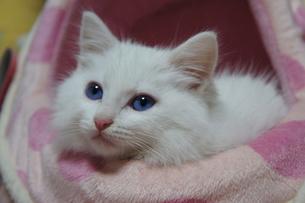 青い瞳の写真素材 [FYI00125804]