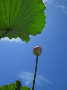 見上げる青い空の写真素材 [FYI00125845]