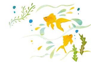 水で泳ぐ金魚の素材 [FYI00125962]