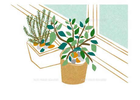 窓際の観葉植物の素材 [FYI00125965]